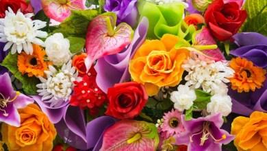 Photo of Plantas e flores para decoração do ambiente!