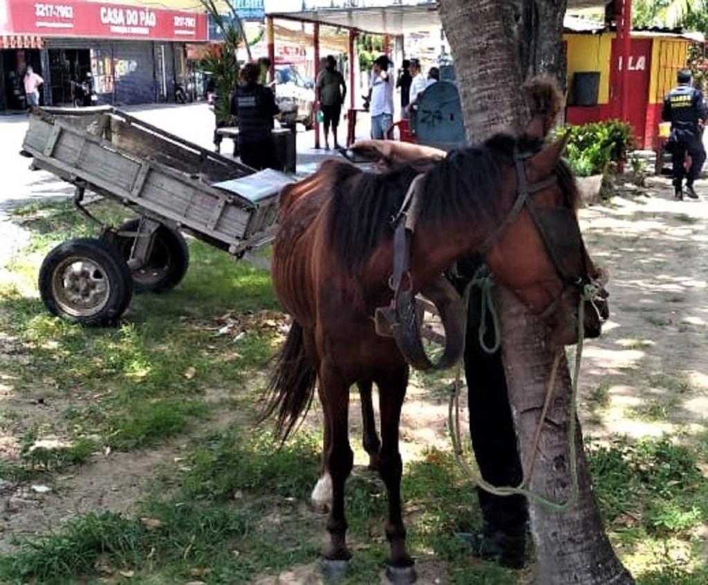 Guarda Municipal de Natal prende suspeito bater em cavalo debilitado em Neópolis, na Zona Sul da capital
