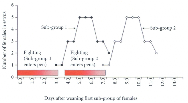 Relationship between the occurrence of fighting and estrous activity when five females per