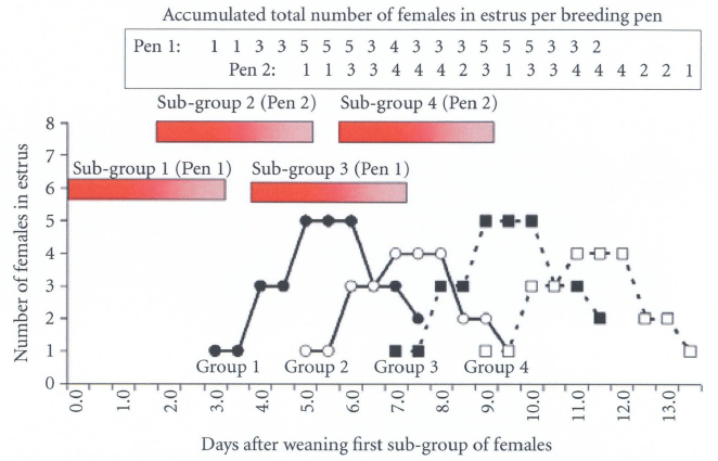 Relationship between the occurrence of fighting and estrous activity when five females are