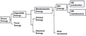 Figure 1. Partitioning of feed energy (gross energy) during digestion and metabolism. Adapted from [2].