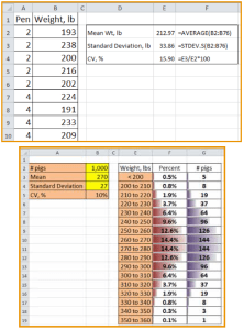 Figure 3 (top) The formulas required in Excel to calculate the mean, standard deviation, and coefficient of variation (CV) of the sample pigs weighed. Figure 4 (bottom) The estimate number or percent of pigs in each weight group given a set number of pigs, mean and standard deviation.