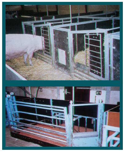 Construction bare pigs