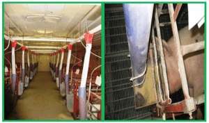 Figure 5. Full fed lactation feeding system in existing dry feeders with feed line.