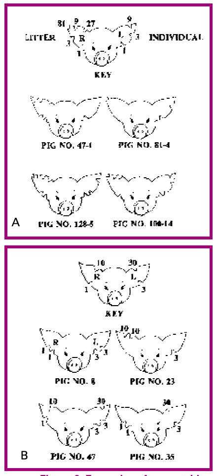 Baby Pig Management - Birth to Weaning - Pork Information Gateway