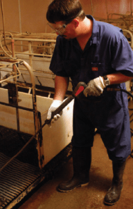 Power washing is a source of noise exposure in swine barns.