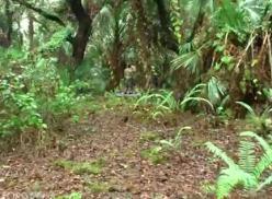 Dois sarados transando na floresta.