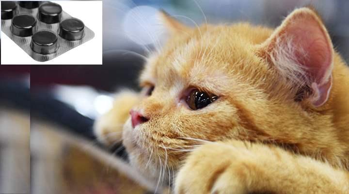 дать кошке противовирусное , адсорбирующее или антибактериальное средства