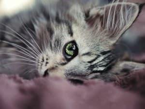 Как сделать кошку ласковой: секреты правильного воспитания. Как сделать кошку ласковой: секреты правильного воспитания Как сделать чтобы кошка была доброй