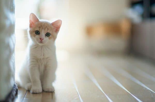 Первичный и вторичный гиперпаратиреоз у кошек: способы лечение и симптомы. Первичный гиперпаратиреоз: симптомы, диагностика, лечение