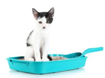 como-conseguir-que-un-gato-haga-sus-necesidades