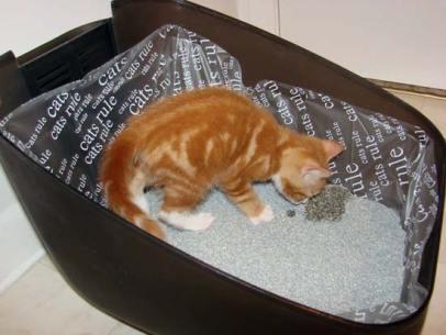gatos-en-un-arenero