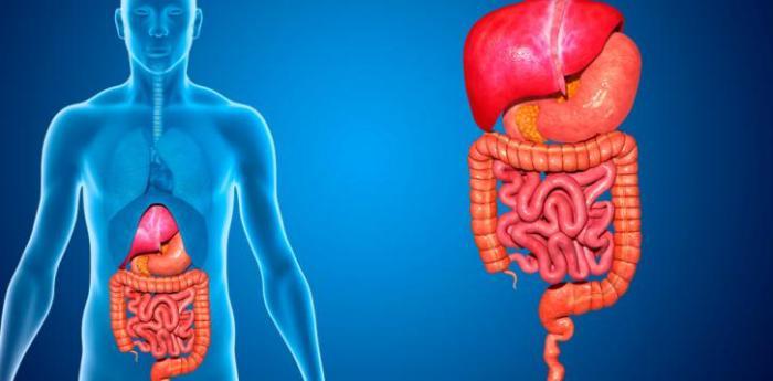 partes-del-aparato-digestivo