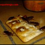 ¿Porque Tengo Cucarachas Pequeñas En Casa?