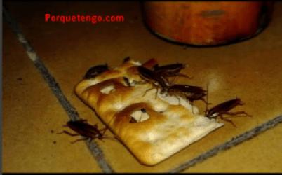 Porque tengo cucarachas peque as en casa te daremos for Como eliminar cucarachas pequenas en casa