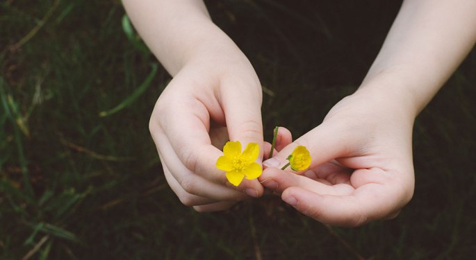 Kids Hand holding Yellow flowers