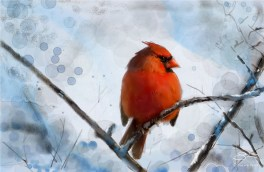 Cardinal in the Snow 12/29/2011
