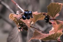 Four Berries, Central Park 10/2/2014