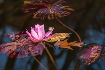 Lily in the Conservatory Gardens 11/9/2014