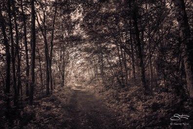 Path parallel to South Road, Bashakill WMA, Sullivan County, NY 6/7/2015