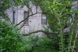 20110604 Peach Tree 2 St B-C 148