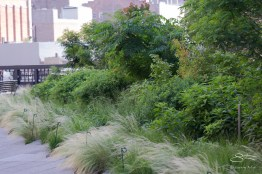 2011-06-18 High Line 015