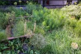 2011-06-18 High Line 51
