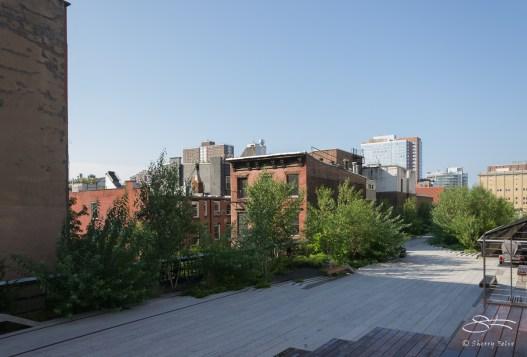 2011-07-09 High Line 43