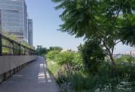2011-07-09 High Line 65