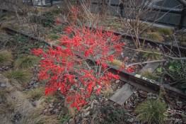 2012-12-30 High Line 11