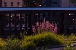 2016-05-08 High Line 31
