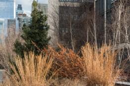 High Line Grasses 2/19/2017