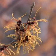 Witch Hazel, High Line 2/19/2017