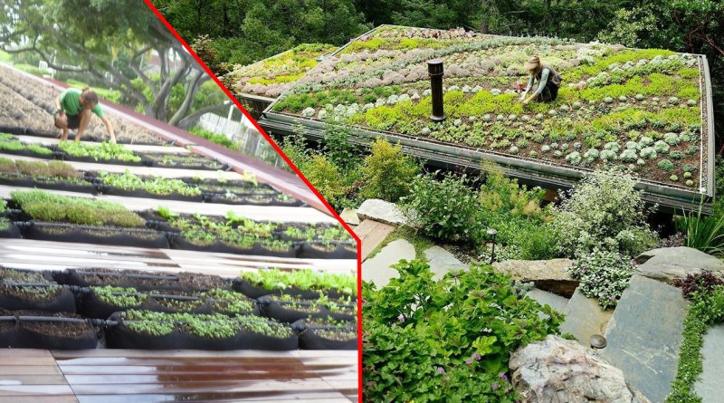 , Cómo construir un techo verde comestible – Guía completa