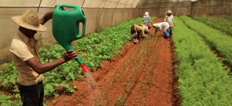 El suelo es la fábrica de la vida: Manual de agricultura ecológica, principios básicos y aplicaciones -
