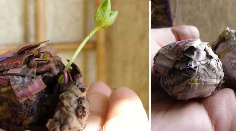 , Cómo hacer bombas de semillas con periódicos. Incluye manual en PDF –