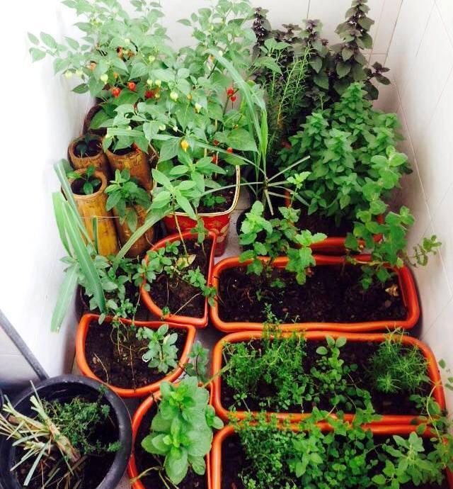 , Cómo cultivar un huerto dentro de un apartamento
