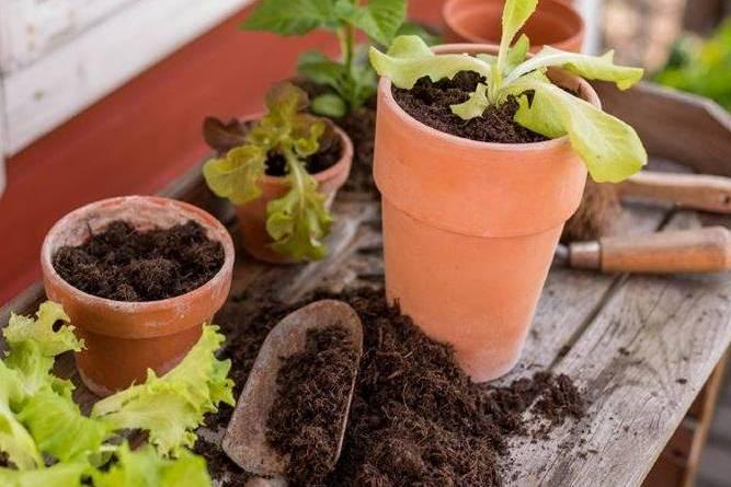, Qué es y cómo hacer tierra para macetas
