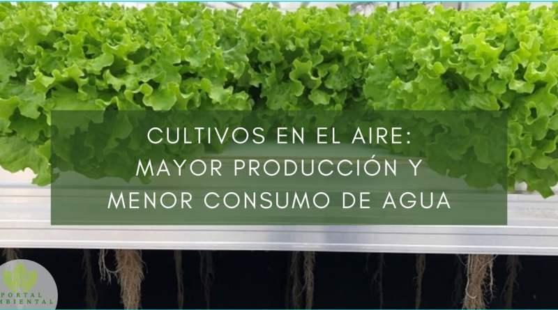 , Cultivos en el aire: mayor producción y menor consumo de agua