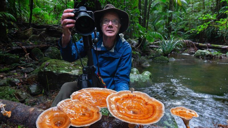 El extraño y mágico mundo de los hongos de la India