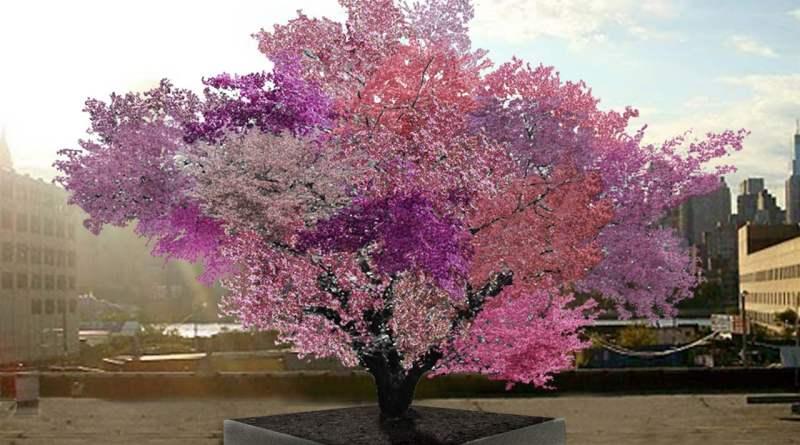 , El increíble árbol que da más de 40 tipos de fruta