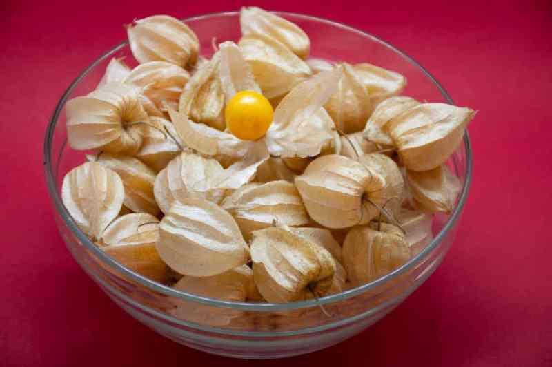 Uchuva: el fruto que ayuda en la recuperación del Alzheimer y el Parkinson