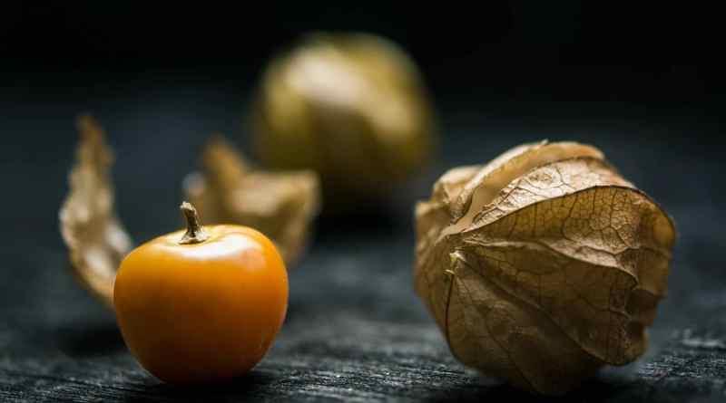 , Uchuva: el fruto que ayuda en la recuperación del Alzheimer y el Parkinson