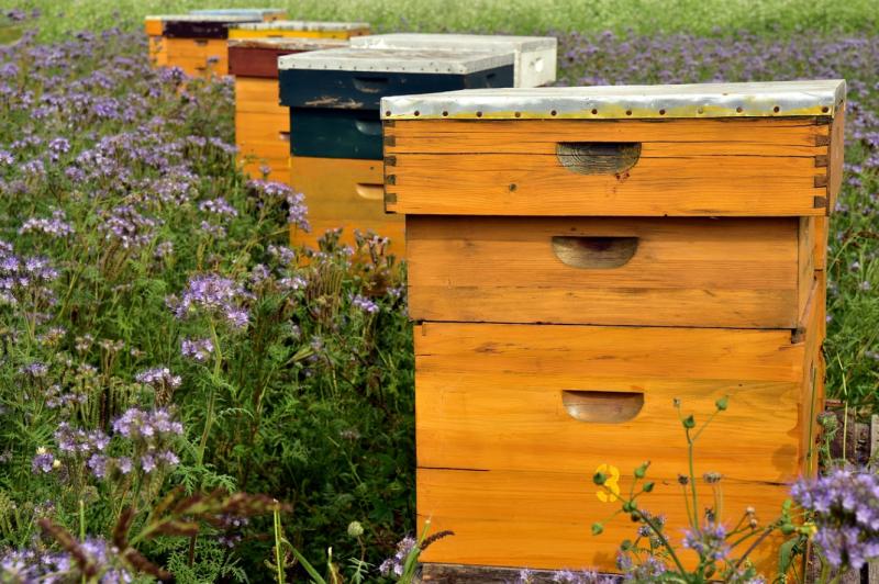 , Supermercado vende miel y productos orgánicos de su propio huerto en la azotea