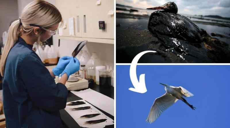 , Joven creó disolvente sin tóxicos que elimina el 90% del petróleo en animales