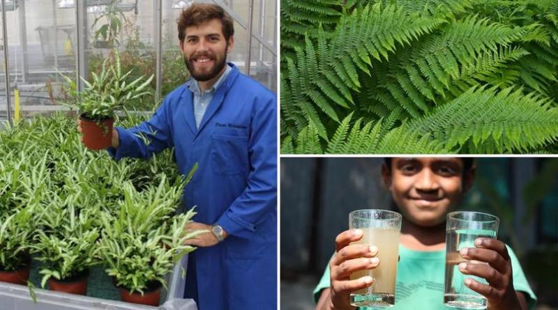 , Joven creó un filtro ecológico que elimina el arsénico del agua con helechos