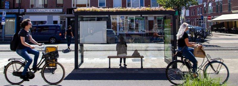 , Holanda convierte 316 paradas de autobús en refugios para abejas