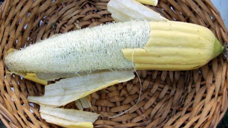 , Aprende a cultivar tus propias esponjas vegetales en lugar de usar las de plástico
