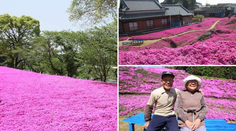 , Kurori construyó un jardín con miles de flores para que su esposa ciega pudiera olerlo