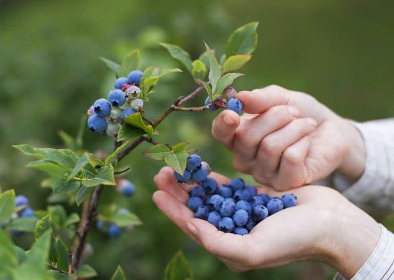 , Dinamarca llenará su ciudad de frutales para ofrecer alimento saludable y gratuito